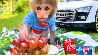 Baby monkey Bon Bon and puppy go to a picnic to eat lunch