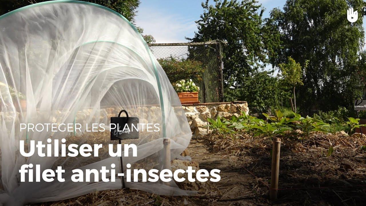 Utiliser un filet anti insectes