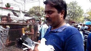 GALIFF STREET PIGEON MARKET KOLKATA  INDIA   HIGH FLYING PIGEON PRICE   10TH JAN 2021 VISIT PART 2