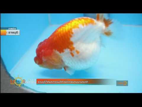ย้อนหลัง ราชบุรีจัดมหกรรมสัตว์น้ำสวยงามนานาชาติ