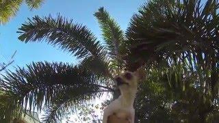 Покупка Собаки в Таиланде + вывоз из Страны (документы + вет клиника)