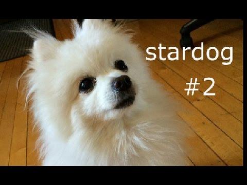 Gabe the dog - starman