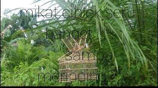 Download Video Serunya mikat ciblek MP3 3GP MP4