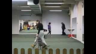 Obedience Training With Luumu (recall & Heel)