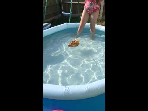 Swimming chicken doovi for Swimming chicken