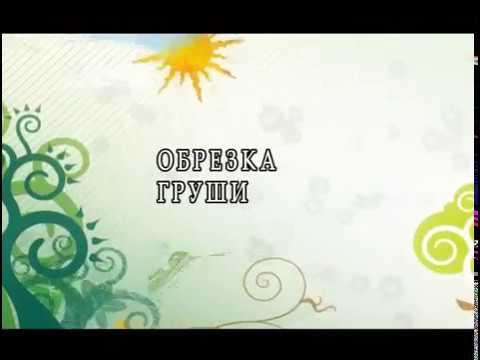 Обрезка груши. Автор Николай Рабушко. ©