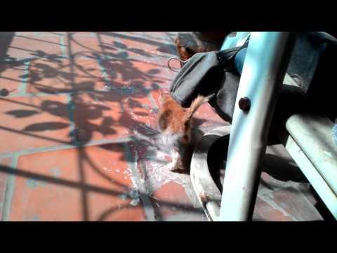 Mèo con phơi nắng