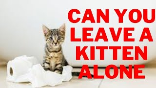 How Long Can You Leave a Kitten Alone : What You Need to Know