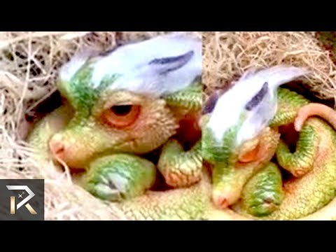 Download Youtube: Mythical Creatures That Were Found In Real Life