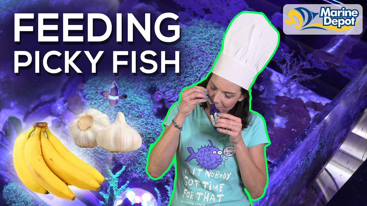 5 TIPS For Feeding Picky Fish In Your Tank   A How-To with Hilary: Marine Biologist of WaterLogged