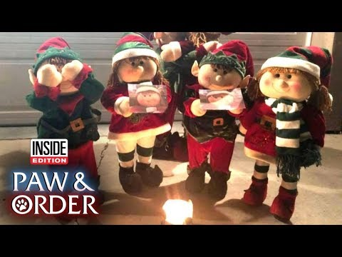 Paw & Order: Who Murdered This Family's Elf?