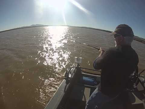12 26 14 montezuma slough keeper sturgeon youtube