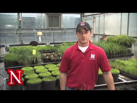 Nebraska Jobs: UNL Employment Opportunities