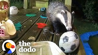 Guy Builds His Kids A Playground — And Wild Animals Move In | The Dodo Wild Hearts