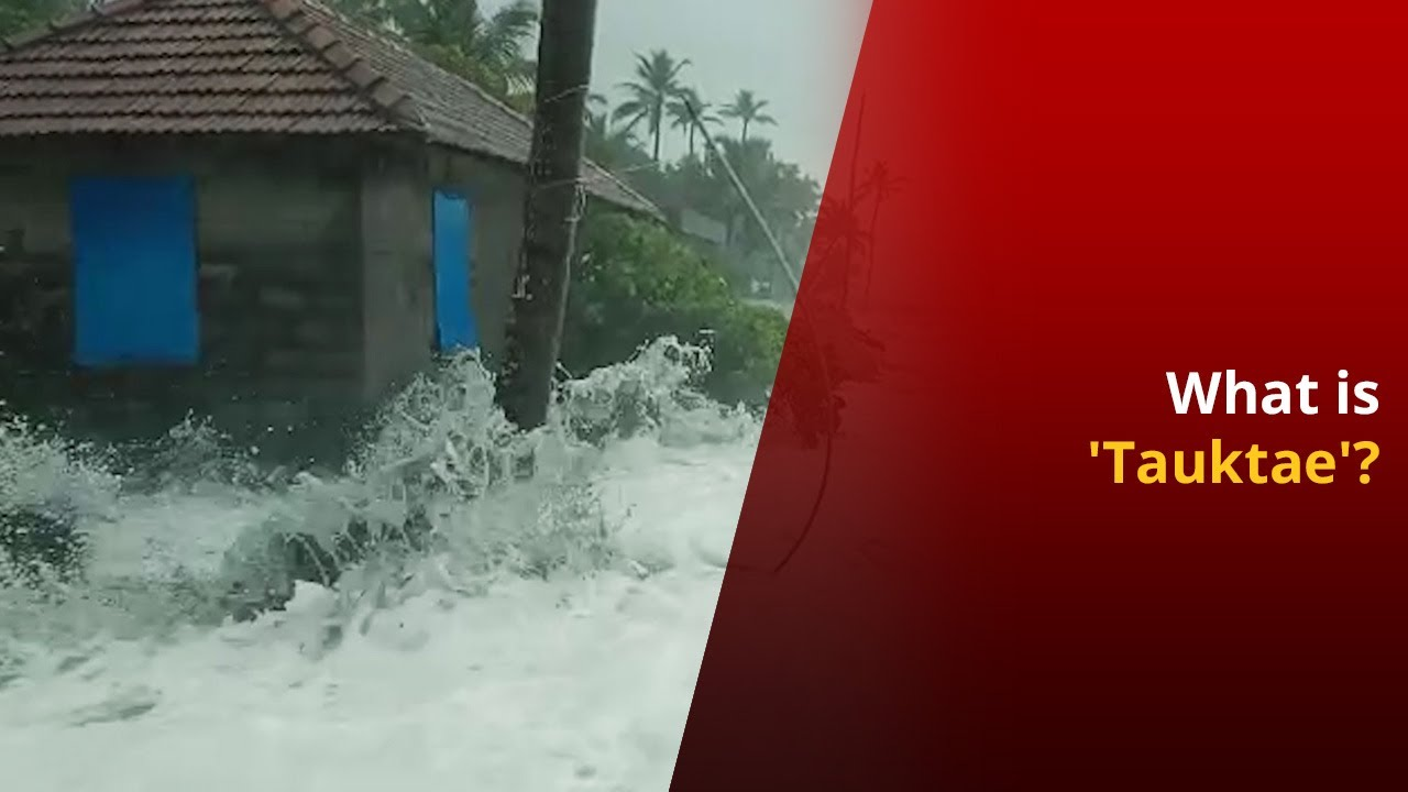 All You Need To Know About Arabian Sea Cyclone 'Tauktae'   NewsMo