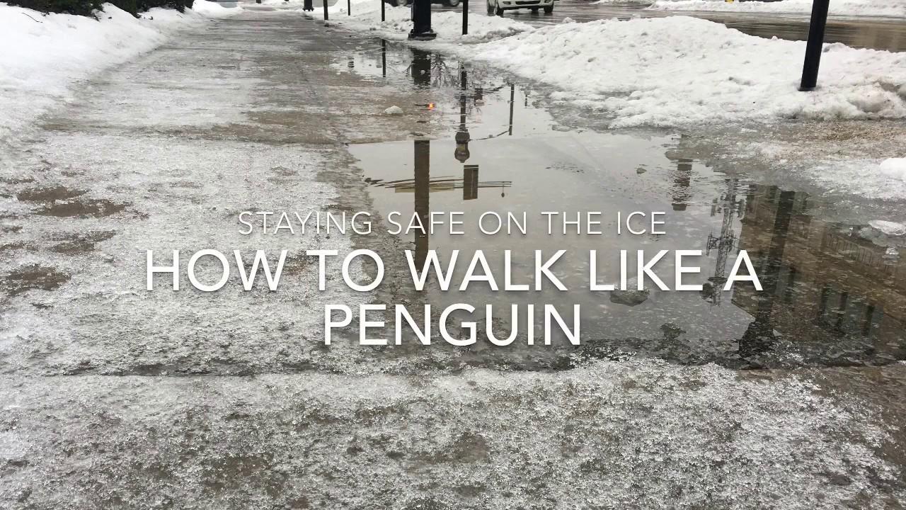 Icy Sidewalks Walk like a Penguin Icy Sidewalks Walk like a Penguin new images