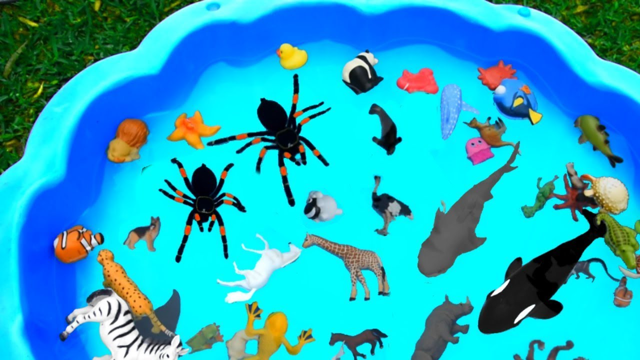Learn Colors with Sea Animal and Wild Zoo Animals | Toys For Kids