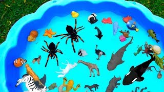 Learn Colors with Sea Animal and Wild Zoo Animals   Toys For Kids