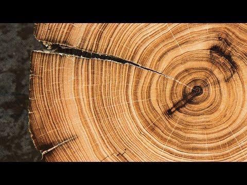 radiocarbon dating tree rings