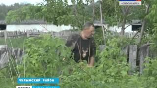 Фермер из Чулымского района Новосибирской области