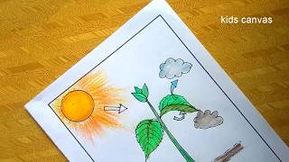 How to draw photosynthesis in plants picture, science project, educational video