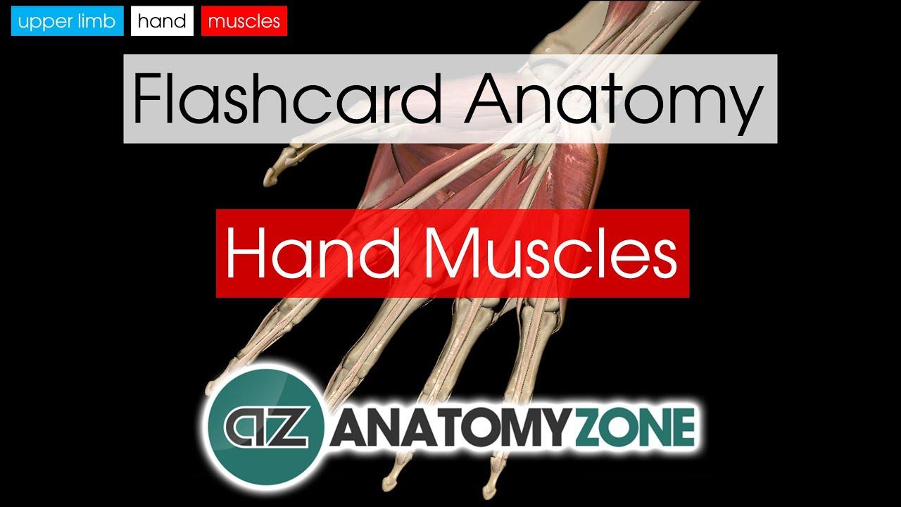 Hand Muscles Flashcard Anatomy Youtube
