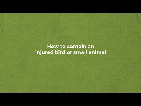 HOW TO CONTAIN AN INJURED BIRD OR SMALL ANIMAL