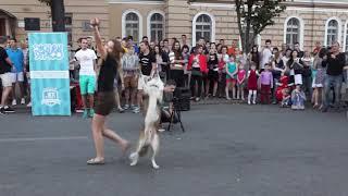 Cобачий фристайл - танец кинолога и собаки. Видео, как образец. Харьков