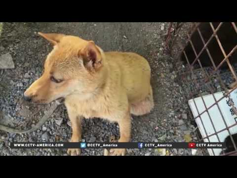 Activists attempt to stop notorious dog meat festival in Yunlin
