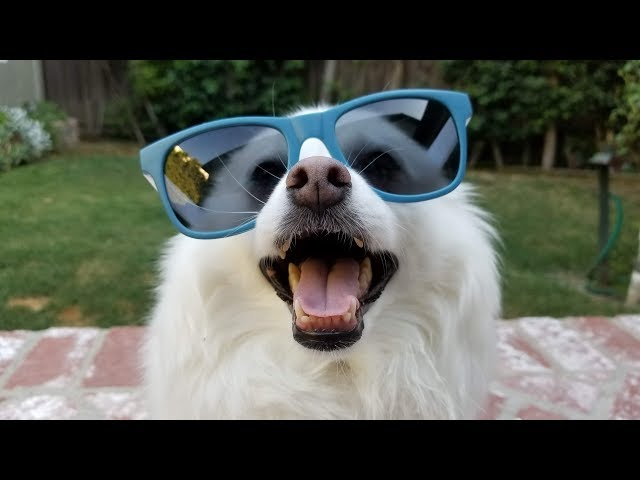 A message from my dog Klondike