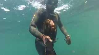 Pesca Submarina Norte de Portugal 2015