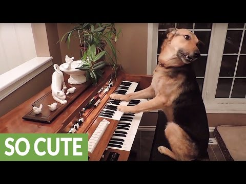 Thumbnail: This compilation of smart dogs will leave you astonished!
