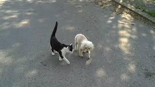 Кошка помогает ослепшему другу-пёсику найти дорогу домой. Трогает до слез!