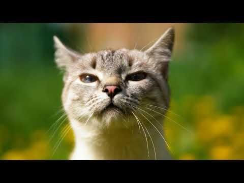 Как вывести глисты у кошки в домашних условиях