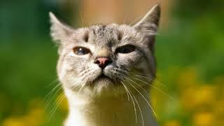 Как избавиться от глистов у кота в домашних условиях?