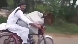 Viral: un hombre fue filmado mientras paseaba moto con una vaca