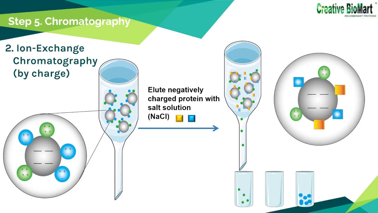 protien purification The protein purification facility is a resource of information and assistance available to researches and students as well as biotech and pharmaceutical companies that are interested in protein purification.