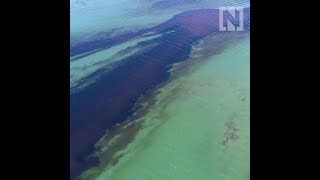Drone footage shows extent of Mauritius oil spill