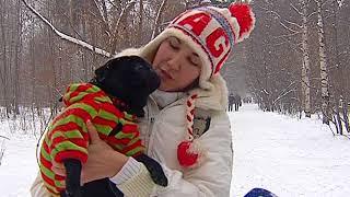 Травля собак в Перми