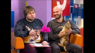 Юрий Куклачёв и бенгальские кошки // Утро на 5