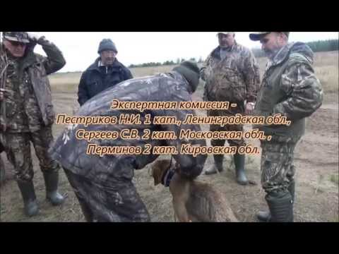 Р.Г. Звонка вл.Шевчук А.Н. дип. 1ст.,  17.10.2015г. Киров.