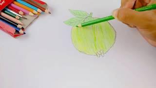 Belajar Menggambar Dan Mewarnai Buah Jambu Biji Youtube