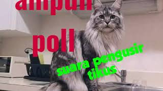 Suara Kucing Nakuti Tikus Lagu MP3 dan MP4 Video