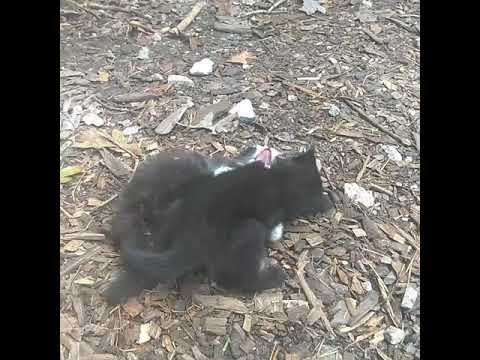 Kittens playing  at LEAF community