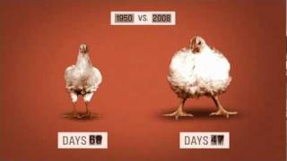 The 49 Day Chicken