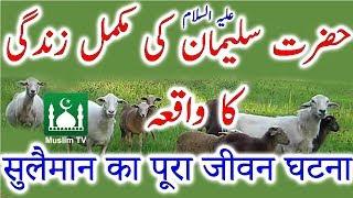 Hazrat Suleman A S ki mukaml zandake ka waqa   सुलैमान का पूरा जीवन घटना