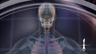 Respiratory System AIDA Freediving