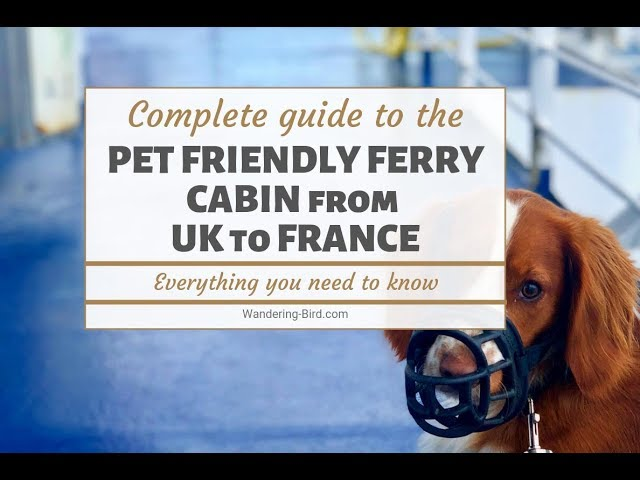 Taking a dog to France? Try a Pet-Friendly ferry cabin with Brittany Ferries