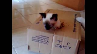 Супер кот Абармот -Смешные видео с котами-Выпуск 3
