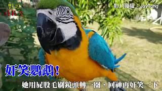奸笑鸚鵡,笑到讓人頭皮發麻!超爆笑的表情